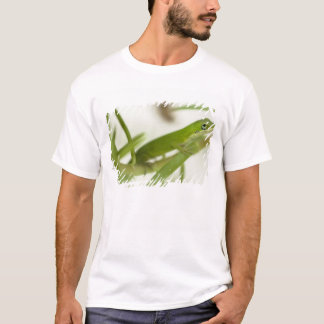 Male green anole, Anolis carolinensis, in a T-Shirt