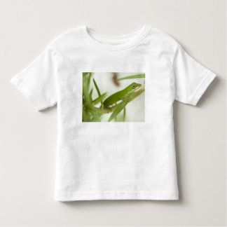 Male green anole, Anolis carolinensis, in a Toddler T-shirt