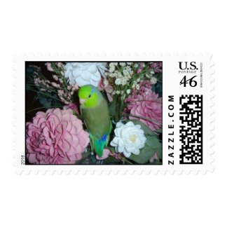 Male green parrotlet with flowers stamps