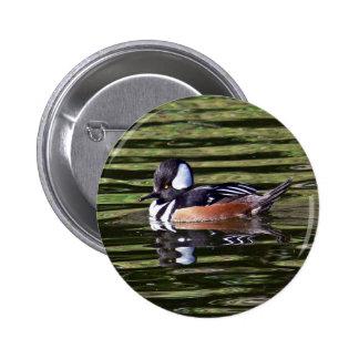 Male hooded merganser pinback button