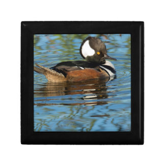 Male Hooded merganser with crest raised Jewelry Box
