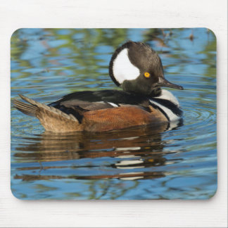 Male Hooded merganser with crest raised Mouse Pad