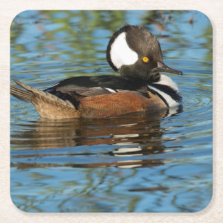 Male Hooded merganser with crest raised Square Paper Coaster