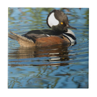 Male Hooded merganser with crest raised Tile