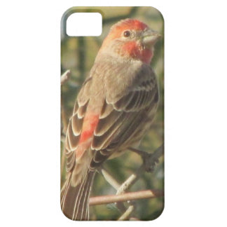 Male House Finch iPhone 5 Case
