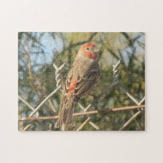 Male House Finch Puzzle