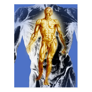 Male Human Anatomy Postcard