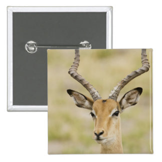 Male impala with beautiful horns in soft light button