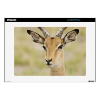 """Male impala with beautiful horns in soft light decals for 15"""" laptops"""