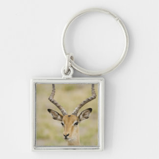 Male impala with beautiful horns in soft light Silver-Colored square keychain