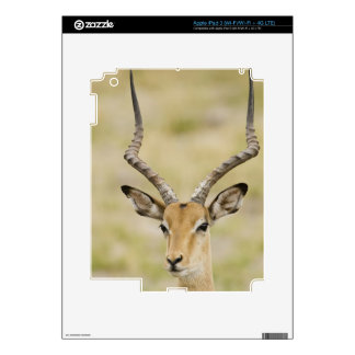 Male impala with beautiful horns in soft light skins for iPad 3