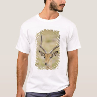 Male impala with beautiful horns in soft light T-Shirt