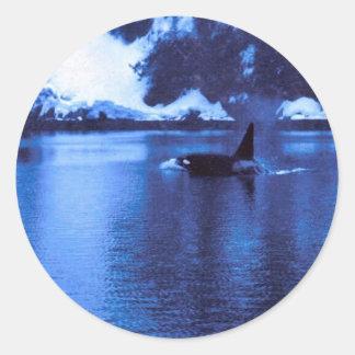 Male Killer Whale Sticker
