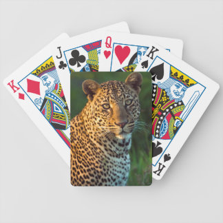 Male Leopard (Panthera Pardus) Full-Grown Cub Bicycle Playing Cards