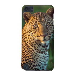 Male Leopard (Panthera Pardus) Full-Grown Cub iPod Touch 5G Cover