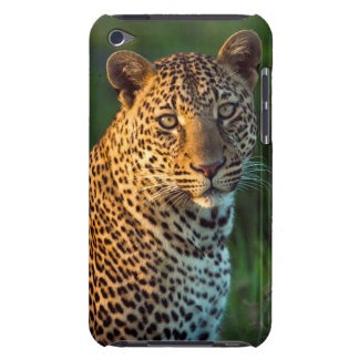 Male Leopard (Panthera Pardus) Full-Grown Cub iPod Case-Mate Case