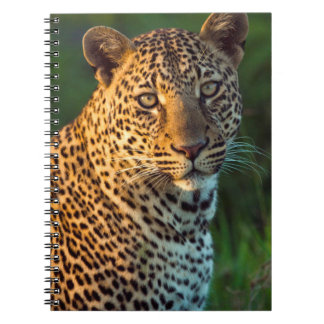 Male Leopard (Panthera Pardus) Full-Grown Cub Notebook