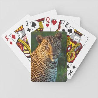 Male Leopard (Panthera Pardus) Full-Grown Cub Deck Of Cards