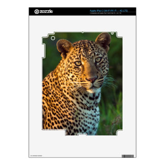 Male Leopard (Panthera Pardus) Full-Grown Cub Decal For iPad 3