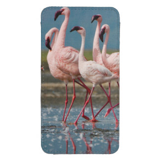 Male Lesser Flamingos (Phoenicopterus Minor) Galaxy S4 Pouch