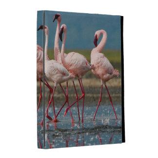 Male Lesser Flamingos (Phoenicopterus Minor) iPad Folio Case