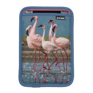 Male Lesser Flamingos (Phoenicopterus Minor) iPad Mini Sleeve