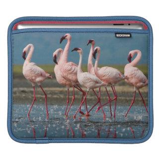 Male Lesser Flamingos (Phoenicopterus Minor) iPad Sleeve