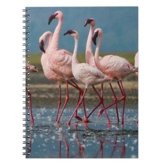 Male Lesser Flamingos (Phoenicopterus Minor) Note Books