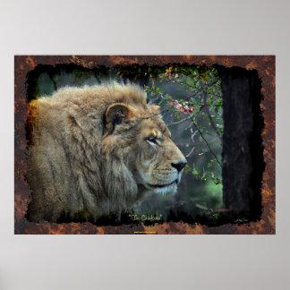 Male Lion Big Cat Wildlife-lover Photo Art Poster