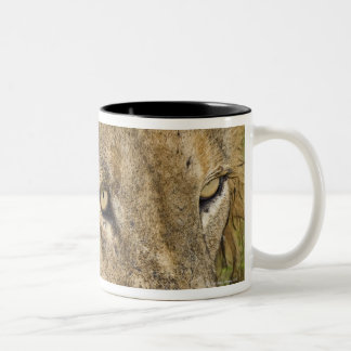 Male lion drinking, Greater Kruger National Two-Tone Coffee Mug