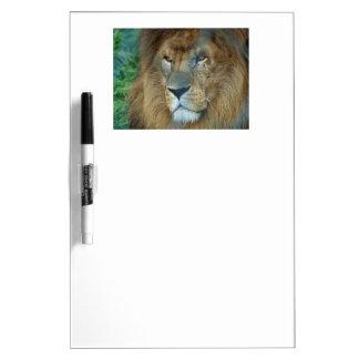 Male Lion Dry-Erase Whiteboard