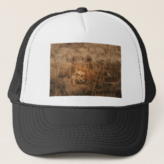Male lion etching embossed wildlife safari hats