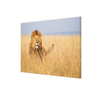 Male Lion Hidden in Grass Canvas Print