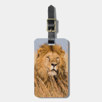Male Lion Hidden in Grass Luggage Tag