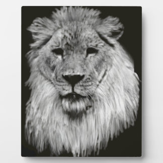 Male lion in Black and White Plaque
