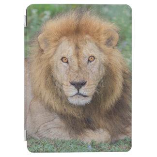 Male Lion Lying Down iPad Air Cover