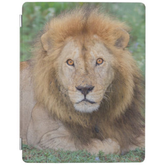 Male Lion Lying Down iPad Smart Cover