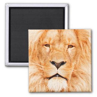 MALE LION MAGNET