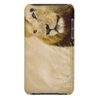 Male lion (Panthera leo) portrait, Masai Mara, Case-Mate iPod Touch Case
