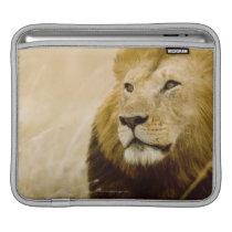 Male lion (Panthera leo) portrait, Masai Mara iPad Sleeve