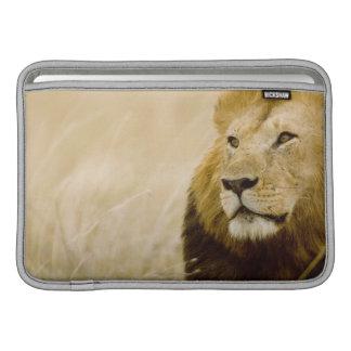 Male lion (Panthera leo) portrait, Masai Mara MacBook Air Sleeve