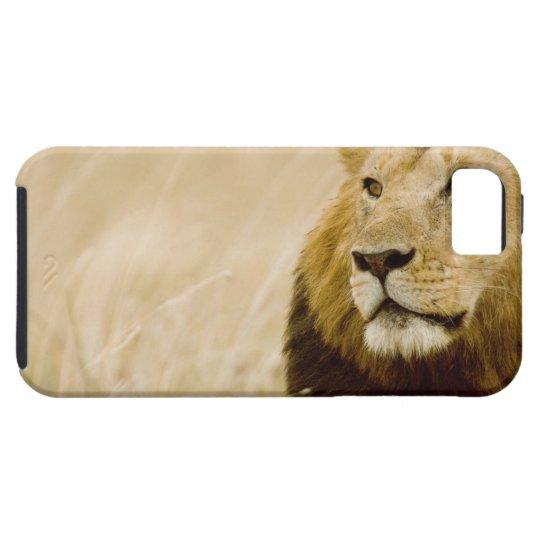 Male lion (Panthera leo) portrait, Masai Mara, iPhone SE/5/5s Case