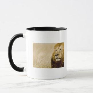 Male lion (Panthera leo) portrait, Masai Mara, Mug