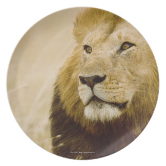 Male lion (Panthera leo) portrait, Masai Mara, Dinner Plate