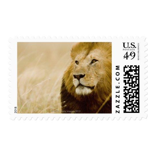 Male lion (Panthera leo) portrait, Masai Mara, Postage