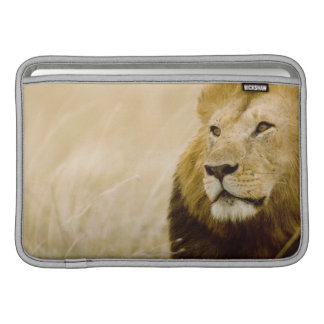 Male lion (Panthera leo) portrait, Masai Mara Sleeves For MacBook Air