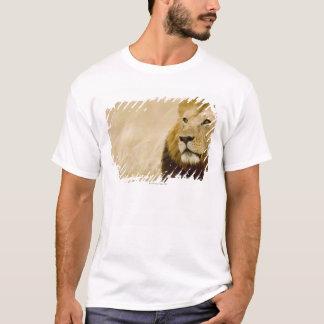 Male lion (Panthera leo) portrait, Masai Mara, T-Shirt