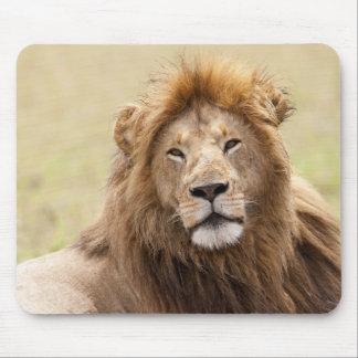 Male Lion Panthera leo) resting, Masai Mara Mouse Pad