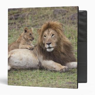 Male Lion Panthera leo) resting with cub, Vinyl Binder