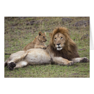 Male Lion Panthera leo) resting with cub, Card